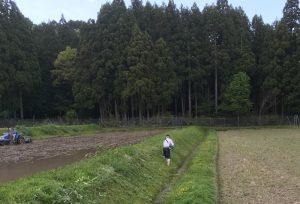 草刈り風景